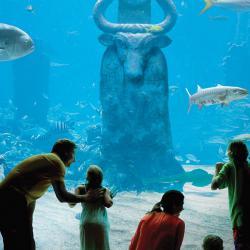 Animal Lovers: Atlantis, Paradise Island