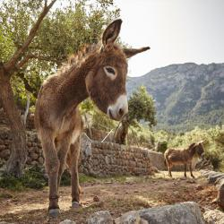 Animal Lovers: Belmond La Residencia