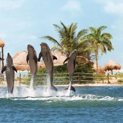 Animal Lovers: Hyatt Ziva Cancún
