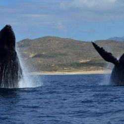 Animal Lovers: Hyatt Ziva Los Cabos