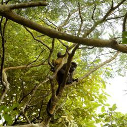 Animal Lovers: Andaz Costa Rica Resort at Peninsula Papagayo