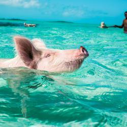 Water Pursuits: Grand Isle Resort & Spa
